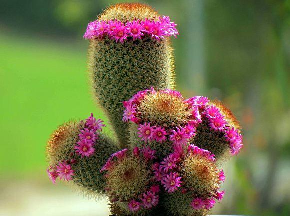 Цветы с картинками кактус